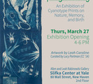 Spring Awaking, an exhibition of contemporary cyanotype photographs on view at Slifka Center through April.