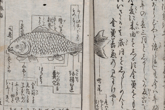 YAJ 10b7. A detail from a printed Edo book on goldfish. A lineart goldfish surrounded by text labeling the parts of the fish.